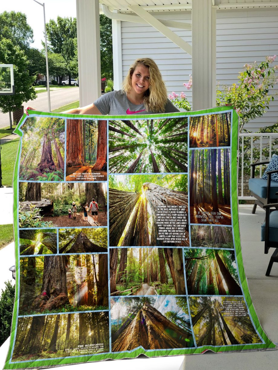 Redwood And Sunlight Quilt Blanket